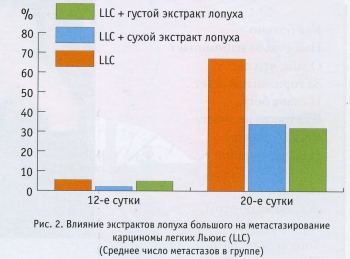 Влияние экстрактов лопуха большого на метастазирование карциномы легких Льюис