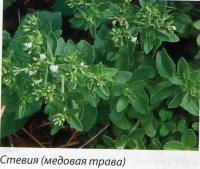 Стевия (медовая трава)