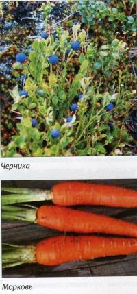 Черника+Морковь