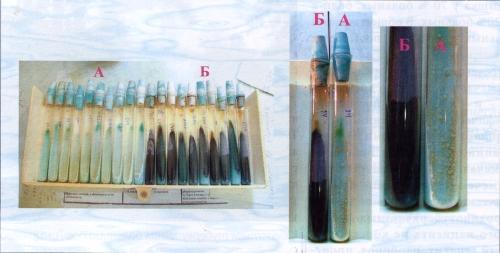 Действие популина на рост туберкулезной палочки, выделенной из мокрот больных туберкулезом, в эксперименте