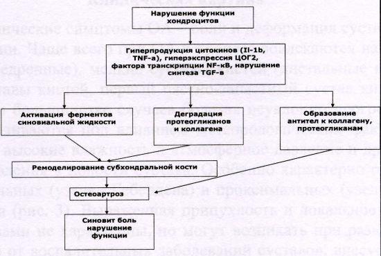 Схема патогенеза ОА
