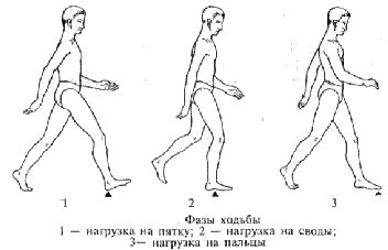 Фазы ходьбы