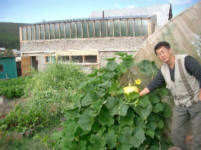 Эксперементальное хозяйство ЭМ-центра в Улан-Удэ