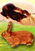 Кролиководство - опыт в личном хозяйстве
