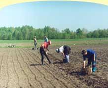 Подготовка почвы и посадка в открытый грунт