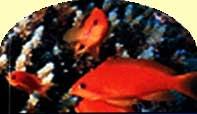 ЭМ-технология в рыбоводстве