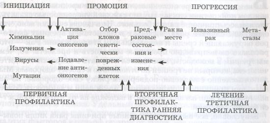 Схема развития злокачественных