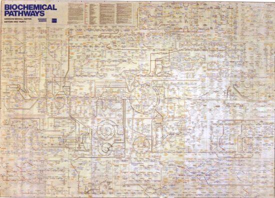 Биохимические процессы, протекающие в одной усредненной клетке ( Boehringer Mannheim, Editor Geryard Michal, edition 1992)