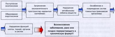 Рис. 4. Взаимосвязь интоксикации организма и возникновения заболеваний