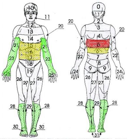 Заболевания пищевода, верхних отделов желудка, печени, желчного пузыря; неврологические синдромы остеохондроза нижнего грудного отдела позвоночника (а также миозиты, радикулиты в этом отделе), ожирение (рис. 7).