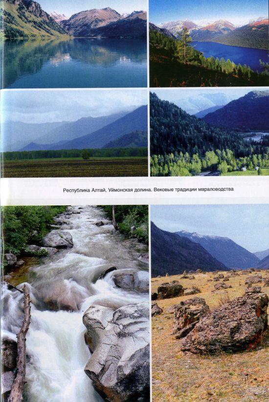 Республика Алтай. Уймонская долина. Вековые традиции мараловодства