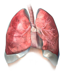 Эмфизема легких: симптомы, причины возникновения, лечение и профилактика.