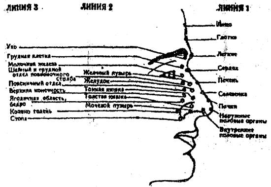 Схема лицевых точек.