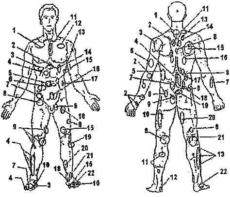 Проекции органов и участков тела на поверхность тела
