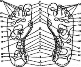 Проекции органов и участков тела на поверхность стоп