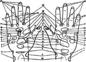 Проекции органов и участков тела на поверхность ладони
