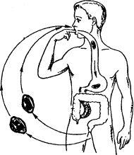 Механизм заражения лямблиозом