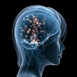 Ацетил-L-Карнитин: энергизатор мозга