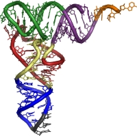 Валин, лейцин, изолейцин (аминокислоты с разветвленными цепями)