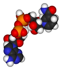 Никотинамид-аде-ниндинуклеотид (NADH): энергизатор клеток